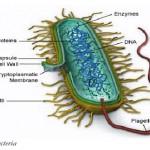 Cryofiltration pour éliminer cette bactérie infectant l'eau de process alimentaire, 13